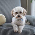 pelo de las mascotas en la tapiceria